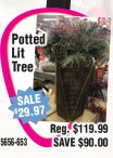 Potted Lit Tree