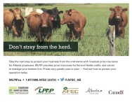 Potect your business from the unknowns with livestock price insurance
