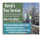 David's Tree Service. Your tree health specialist and surgeon.