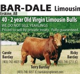 40 - 2 year Old Virgin Limousin Bulls priced to sell