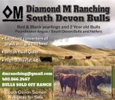 Red & Black yearlings and 2 Year old Bulls