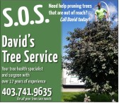 Need help pruning trees that are out of reach?