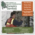GREY SAUBLE and SAUGEEN CONSERVATION Forestry Services